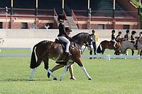 Leading Rein Hunter Pony