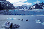 Alaska, Kenai Fjords National Park, Sea kayakers paddle Pederson Lagoon, Pederson Glacier