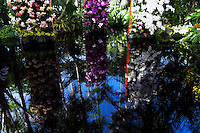 Orchids are reflected on water during the Orchid show at the botanical garden in Bronx, New York. March 18, 2014. Photo by Eduardo Munoz Alvarez/VIEW