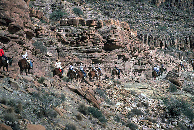 Bright Angel trail, Grand Canyon, National Park, Mules, Donkeys, Riders. switchbacks,