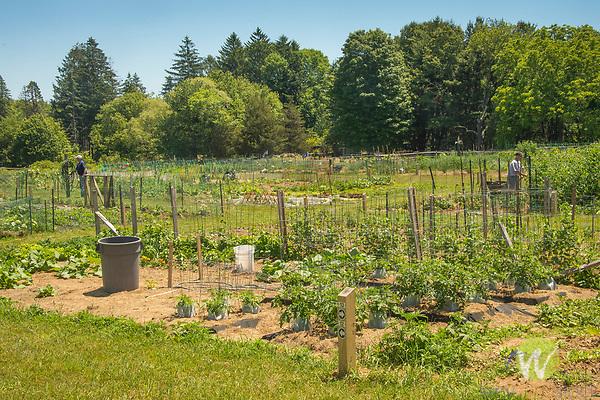 Bauer Park Community Garden. Madison, CT.