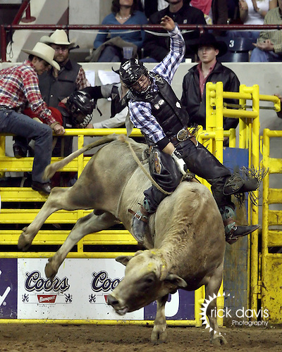 1/24/09--Photo by Rick Davis--PRCA cowboy Zack Elliott of Thatcher, Utah scores a 73 point ride on the bull Bull Durham during action at the 103rd National Western Stock Show and Rodeo in Denver, Colorado.