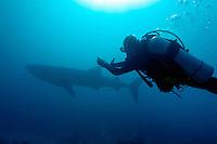 Scuba diver swimming alongside a Whale Shark (Rhincodon typus), Rango Madivaru, Ari Atoll, Maldives.