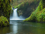 Columbia Gorge National Scenic Area, OR<br /> Punchbowl Falls on Eagle Creek in moss & fern covered basalt gorge, Mt. Hood National Forest