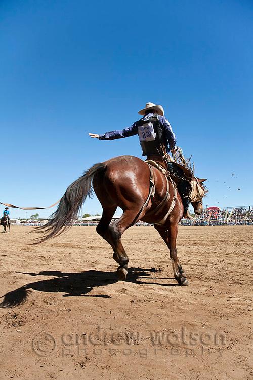 Saddle bronc rider at Mareeba Rodeo.  Mareeba, Queensland, Australia