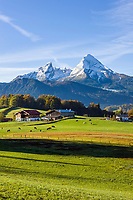 Deutschland, Bayern, Oberbayern, Berchtesgadener Land, bei Bischofswiesen: Herbstlandschaft vorm Watzmann | Germany, Bavaria, Upper Bavaria, Berchtesgadener Land, near Bischofswiesen: autumn scenery with Watzmann mountain