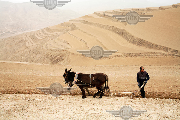 Nan Jianjun, a member of the Muslim Dongxiang ethnic minority, uses two donkeys to till a dry terrace wheatfield near Linfang Village.