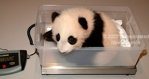 Tai Shan, the nearly 4-month-old giant panda cub at the Smithsonian's National Zoo, weighs in at 15.5 pounds during his 10th exam held this morning. The National Zoo's three giant pandas live at the Zoo's Fujifilm Giant Panda Habitat.
