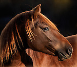 Horse Portraits and Closeups