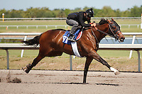 #51Fasig-Tipton Florida Sale,Under Tack Show. Palm Meadows Florida 03-23-2012 Arron Haggart/Eclipse Sportswire.