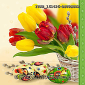 Isabella, EASTER, OSTERN, PASCUA, photos+++++,ITKE161426-BSTRWSK,#e# easter tulips