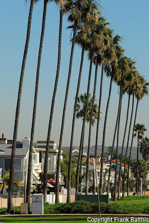 palms on Balboa Peninsula
