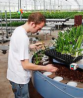 Man werkt in een orchidee kwekerij. ( let op: originele foto heeft een kleine afmeting)