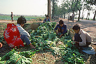 October 1984. On the highway of Si Chuan province. (Guanxian County) farmers are collecting vegetables and wait for the bus to sell them to the nearest big market.