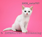 Xavier, ANIMALS, cats, photos, SPCHCATS707,#A# Katzen, gatos
