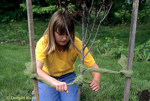 TT19-051z  Girl staking planted tree - (TT19-004e,047z,048z,050z,051z,053z,056z,059z)