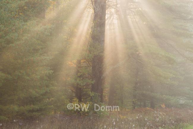 Sunbeams in fog