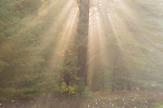 Sunbeams in fog