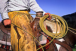 Cowboy taking a dally-cattle branding in Cambria, California