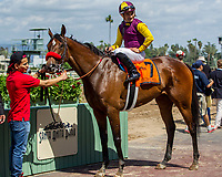 ARCADIA, CA APRIL 8: #7 Hillhouse High ridden by jockey Corey Nakatani in the winners circle after winning the Royal Heroine Stakes (Grade ll) on April 8, 2017 at Santa Anita Park in Arcadia, CA. (Photo by Casey Phillips/Eclipse Sportswire/Getty Images)