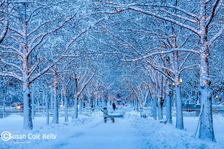 Fresh snow on Commonwealth Avenue, Back Bay, Boston, MA, USA