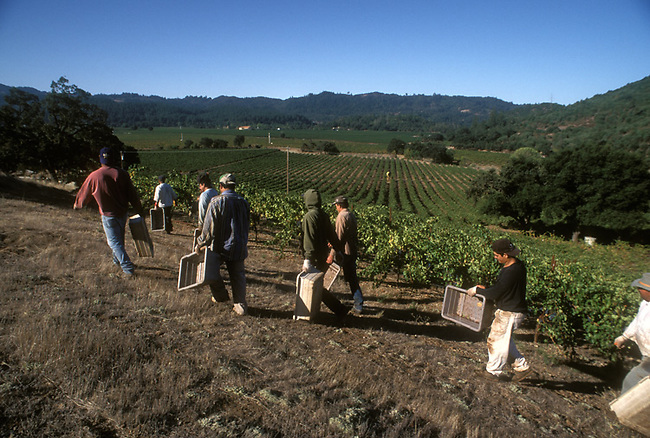 Workers head to vineyard near Calistoga, Ca
