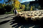 Redyk - uroczyste wyjście pasterzy ze stadami owiec na wypas na górskich halach (redyk wiosenny), Zakopane, Polska<br /> Redyk - ceremonial exit of shepherds with flocks of sheep for grazing on mountain hills (spring reed), Zakopane, Poland