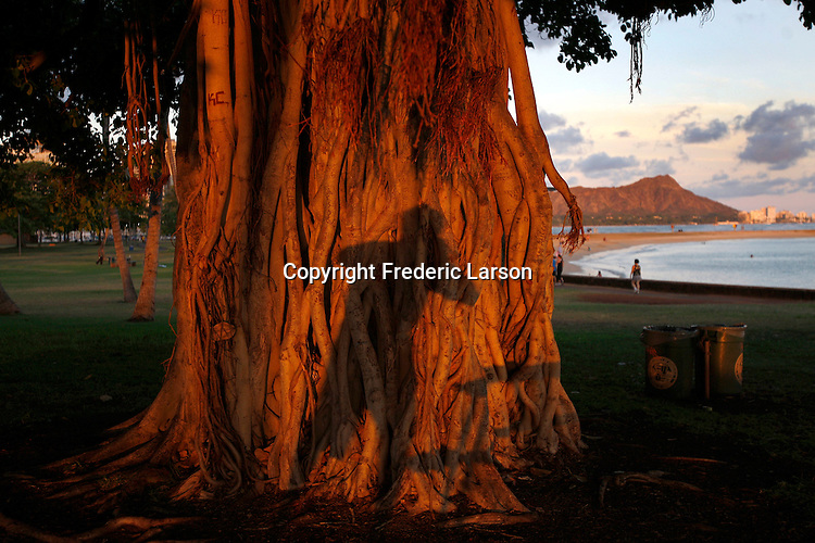 A reflection of a photographer taking a picture of a tree on Magic Island with the view of diamond head Mountain on Waikiki Beach, Honolulu, Hawaii.