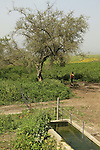 Israel, Lower Galilee, Ein Sirin in Yavniel Heights