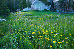 wildflowers, summer, day, wilderness, Rocky Mountain National Park, Colorado, USA