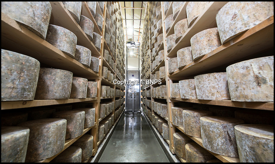 BNPS.co.uk (01202 558833)<br /> Pic: Phil Yeomans/BNPS<br /> <br /> The warehouse contains over 5000 25kg wheels of cheddar...<br /> <br /> Cheesy-peasy...'Tina the Turner' the worlds first cheddar robot keeps the big wheels turning.<br /> <br /> Take a look around the new cheese store built into the side of a hill at Westcombe dairy in Somerset. <br /> <br /> The cheddar is looked after by 'Tina the Turner' the worlds first cheddar turning robot. <br /> <br /> She silently patrols the 5000 cheddar wheels at night turning, brushing and hoovering them as required.