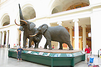 Field Museum of Natural History elephant sculpture.  Chicago Illinois USA