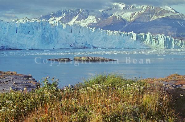 Tidewater face of Hubbard Glacier viewed from Osier Island, Wrangell-Saint Elias National Park and Preserve, Alaska, AGPix_0715.