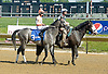 Win Willy before The Joseph French Memorial Stakes at Delaware Park on 5/19/12