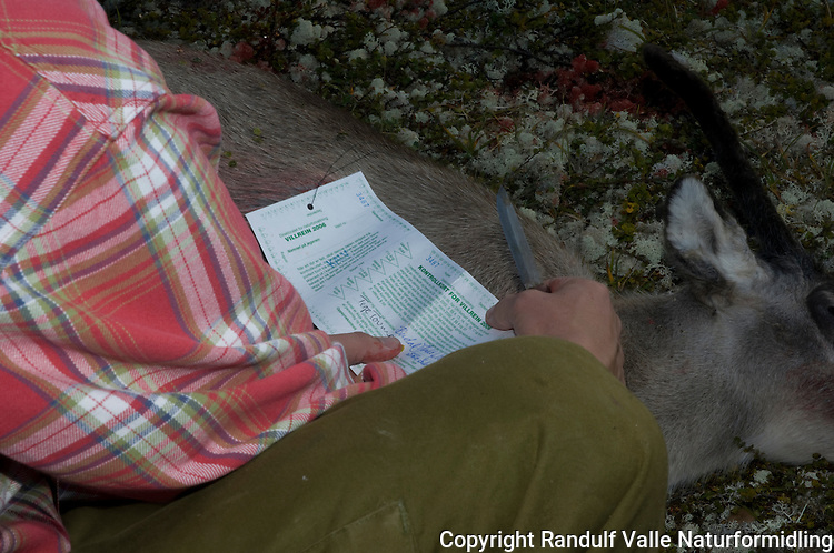 Jeger skjærer jaktkort på villreinsjakt ---- Hunter with hunting lisence