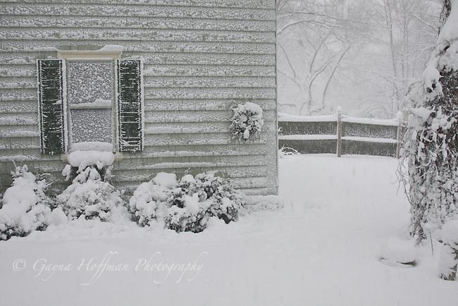 Blizzard, snowstorm scene.