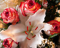 White lily with red tipped white roses
