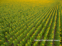 63801-11405 Sunflower field-aerial Jasper Co.  IL