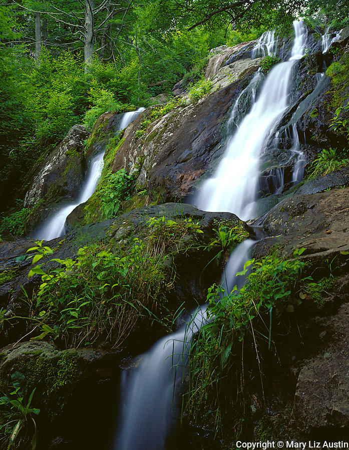 Shenandoah National Park, VA<br /> Dark Hollows Falls a 70 foot series of cascades flows over greenstone located near Big Meadows