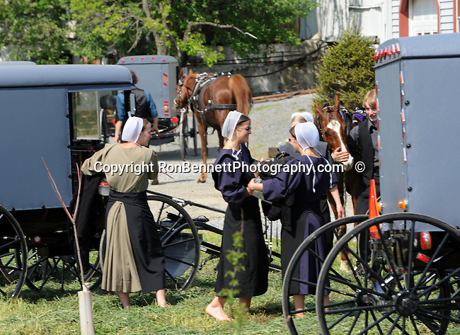 "Amish girls talk in between horse and buggies on farm in Pennsylvania Dutch Amish country in Lancaster County PA, Pennsylvania Dutch in Amish Country Lancaster County Pennsylvania, Amish, Horse and buggy with amish family on backroads of Pennsylvainia, buggy, amish family, buggy and horse, Commonwealth of Pennsylvania, Commonwealth of Pennsylvania, natives, Northeasterners, Middle Atlantic region, Philadelphia, Keystone State, 1802, Thirteen Colonies, Declaration of Independence, State of Independence, Liberty, Conestoga wagons, Quaker Province, Founding Fathers, 1774, Constitution written, Photography history, Fine art by Ron Bennett Photography.com, Stock Photography, Fine art Photography and Stock Photography by Ronald T. Bennett Photography ©, All rights reserved copyright Ron Bennett Photography.Com, FINE ART and STOCK PHOTOGRAPHY FOR SALE, CLICK ON  ""ADD TO CART"" FOR PRICING,"