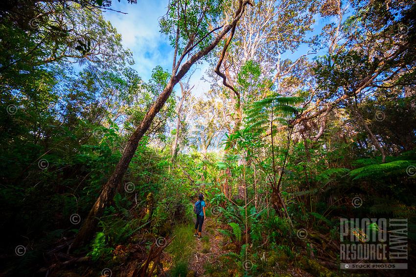 A young woman gazes upward while hiking along the Pu'u 'O'o Trail on Saddle Road near Hilo, Hawai'i Island.