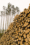 Log stacks