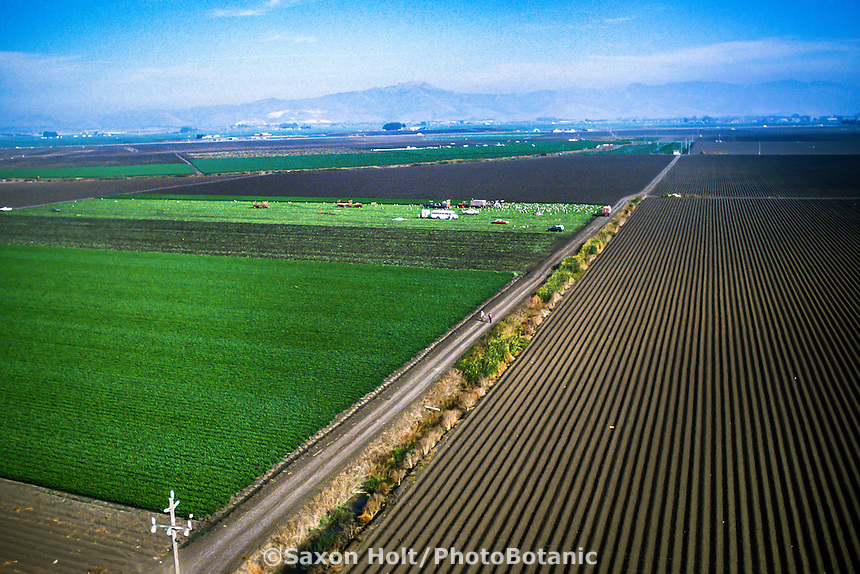 Farm fields in Salinas Valley, California