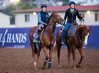 DEL MAR, CA - NOVEMBER 02: Home of The Brave, owned by Godolphin Stable Lessee and trained by Hugo Palmer, exercises in preparation for Breeders' Cup Mile at Del Mar Thoroughbred Club on November 2, 2017 in Del Mar, California. (Photo by Kazushi Ishida/Eclipse Sportswire/Breeders Cup)