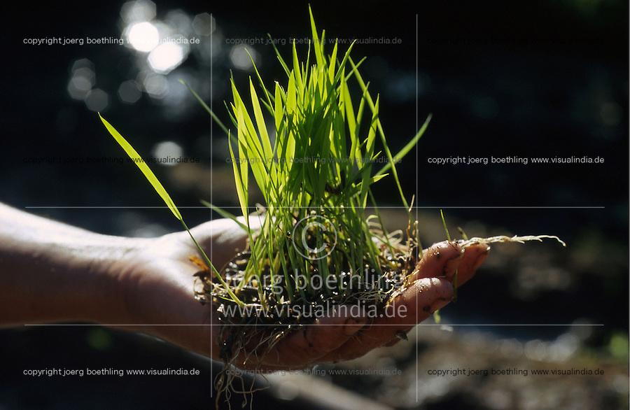 PHILIPPINES, Negros, organic farming after SRI method, System of rice intensification, farmer plant rice in paddy field in village Sitio Tabidiao / Philippinen, Negros, Dorf Sitio Tabidiao, biologischer Reisanbau nach SRI Methode, System System zur Reisintensivierung, Bauern pflanzen Reissetzlinge in bestimmten Abstaenden, das sich die Pflanzen besser entfalten koennen und hoehere Ertraege bringen