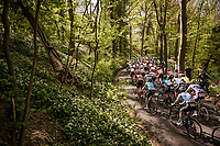 peloton in the forest<br /> <br /> 83rd La Flèche Wallonne 2019 (1.UWT)<br /> One day race from Ans to Mur de Huy (BEL/195km)<br /> <br /> ©kramon