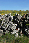 Section of dry stone wall in the Limestone wilderness of the Burren, County Clare, West coast of Ireland.
