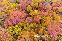 63876-02419 Aerial view of fall color trees Stephen A. Forbes State Park Marion Co. IL