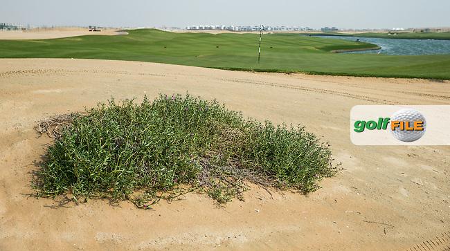 Reverse view of the 5th green at Al Zorah Golf Club, Dubai, United Arab Emirates.  26/01/2016. Picture: Golffile | David Lloyd<br /> <br /> All photos usage must carry mandatory copyright credit (&copy; Golffile | David Lloyd)