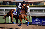 October 30, 2019: Breeders' Cup Dirt Mile entrant Improbable, trained by Bob Baffert, exercises in preparation for the Breeders' Cup World Championships at Santa Anita Park in Arcadia, California on October 30, 2019. Carolyn Simancik/Eclipse Sportswire/Breeders' Cup/CSM